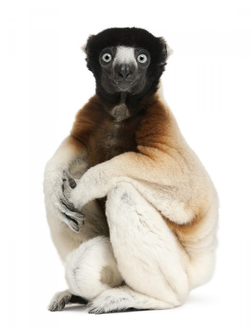 - Part of the book Zoo'M : http://goo.gl/g7j31Q