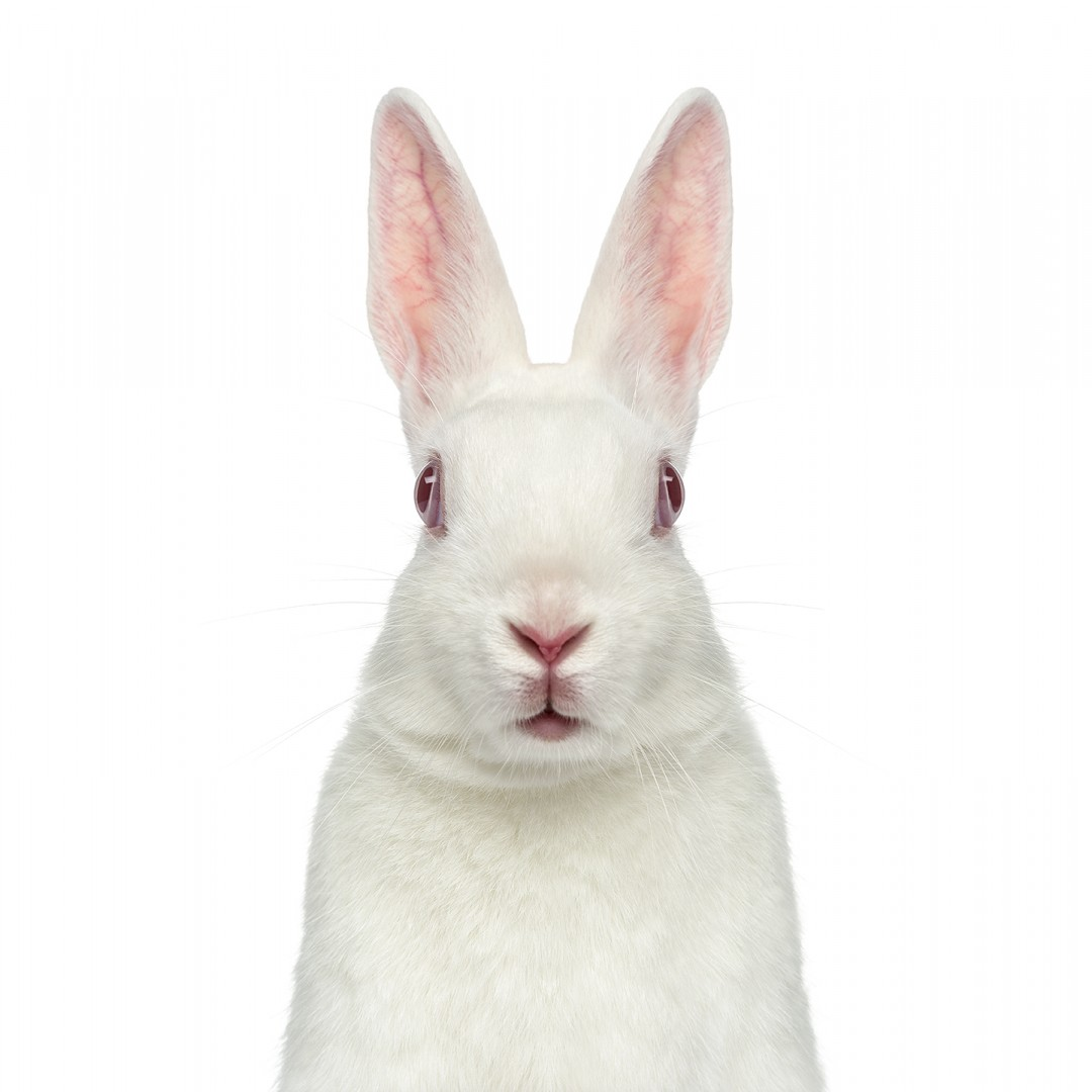 White albino hare facing